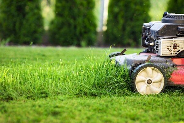 Veja como escolher sua máquina de cortar grama